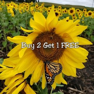 Other - Mix and match any items. Buy 2 get 1 free!